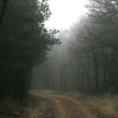 The Road into Mirkwood (Eltjo Poort) Tags: forest haze nevel path hobbit tolkien orton mirkwood instantfave abigfave eltjopoort