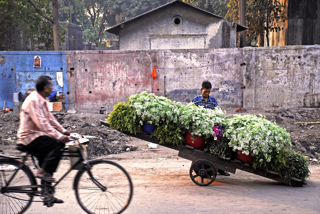 Petals, Toil and Business at Dadar's Phulgalli [PHOTO 1] - Cartload of Flowers