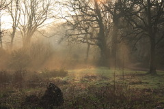 Morning Mist 2 (farmerytwang) Tags: southampton common abigfave impressedbeauty