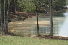 pollen lake