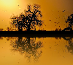 Cottonwood on Fake Golden Pond (Fort Photo) Tags: sunset sun tree nature silhouette gold golden bravo colorado quality manipulation beam cottonwood 2007 displacement naturesfinest blueribbonwinner displacementmap magicdonkey 50faves fakelake outstandingshots abigfave flickrplatinum superbmasterpiece goldenphotographer diamondclassphotographer flickrdiamond superhearts haveawonderfulweekendmyfriend tribesandhya