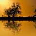 Cottonwood on Fake Golden Pond - by Fort Photo