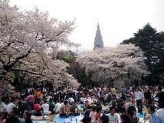 Cherry blossoms in Shinjuku Gyoen and Skyscraper