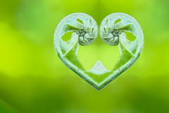 love fern (DocTony Photography) Tags: plant fern macro nature photoshop bravo flood quality magicdonkey nikond80 flickrplatinum doctony
