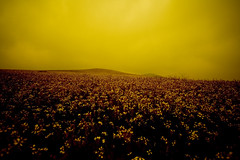 Real lights (Victoriano) Tags: flowers sunset nature field easter landscape outside weird cloudy farmland rainy strangelights flogr
