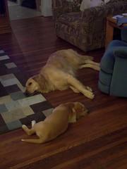 More napping (chris.c.hall) Tags: star nap lilla