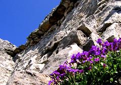 Sulla rocca - by luca.candini