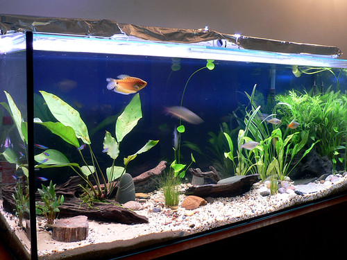 Side View - Tropical Community Tank