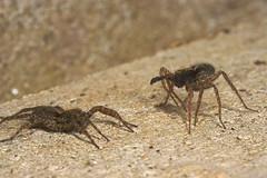 """Spiders Courtship Ritual #5 • <a style=""""font-size:0.8em;"""" href=""""http://www.flickr.com/photos/57024565@N00/464009806/"""" target=""""_blank"""">View on Flickr</a>"""