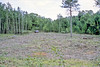 MN aspen clearcut site just after harvest. Click for a better view.