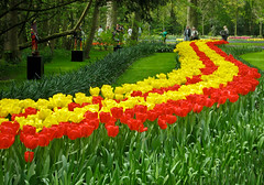 Red & Yellow (Hetty 51) Tags: flowers garden spring tulips oneofakind thenetherlands explore keukenhof lisse abw supershot flowerscolors catchycolorsredyellow agrade 1on1flowers beautifulcapture mywinners abigfave favoritegarden jalalspagesmasterpiecealbum thechallengegame challengegamewinner