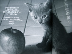 apple & kitten (thezephyrsong_tzs) Tags: apple cat kitten pentax optio wpi  pentaxoptiowpi  shiinaringo