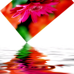tip of the flood (DocTony Photography) Tags: red plant flower color nature photoshop md bravo cookie flood blossom postcard fuschia explore gerbera daisy bloom interestingness12 magicdonkey interestingness44 interestingness54 interestingness38 explorefrontpage flickrsbest superaplus aplusphoto doctony macraw 25april2007
