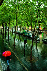 Rain forest in Paris (ole) Tags: street trees red paris france tree green rain forest bravo europe background pedestrian 75012 umbrela leeves xiie 3ofakind reuilly explored outstandingshots abigfave 2pair