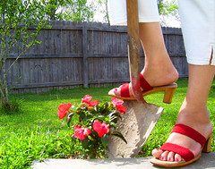Day 95 (lrayholly) Tags: flowers red portrait shoes gardening explore shovel dig redshoes day95 yardwork desperatehousewives wisterialane blueribbonwinner 365days 365explored internationalfootwearweek lrayholly
