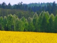 greens on yellow (the-father) Tags: nature spring bravo april 2007 blueribbonwinner magicdonkey