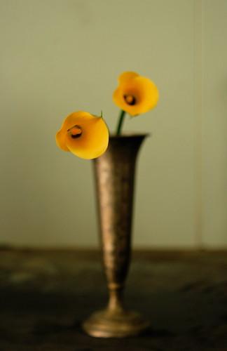 カラー(calla lily)