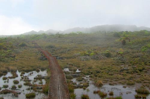 Alakai Swamp Trail, Kauai