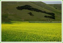 an italian wood (anbri22) Tags: sibillini mountains castelluccio wood italy wonder landscape anbri
