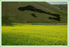 an italian wood (anbri22) Tags: sibillini mountains castelluccio wood italy wonder landscape anbri