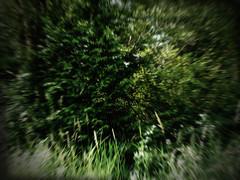 Bigfoot Sighting (Dave Ward Photography) Tags: 2005 trees usa tree green grass scott us washington bush unitedstates indian unfound brush story wa rez bigfoot res bushes reservation sasquatch lummi sighting cryptozoology whatcom davewardsmaragd