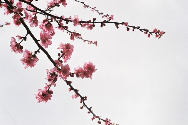 Spring Series