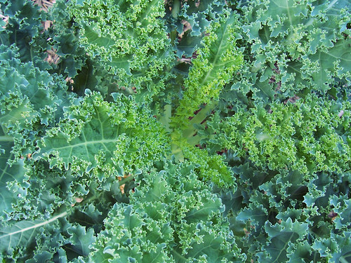 kale from above