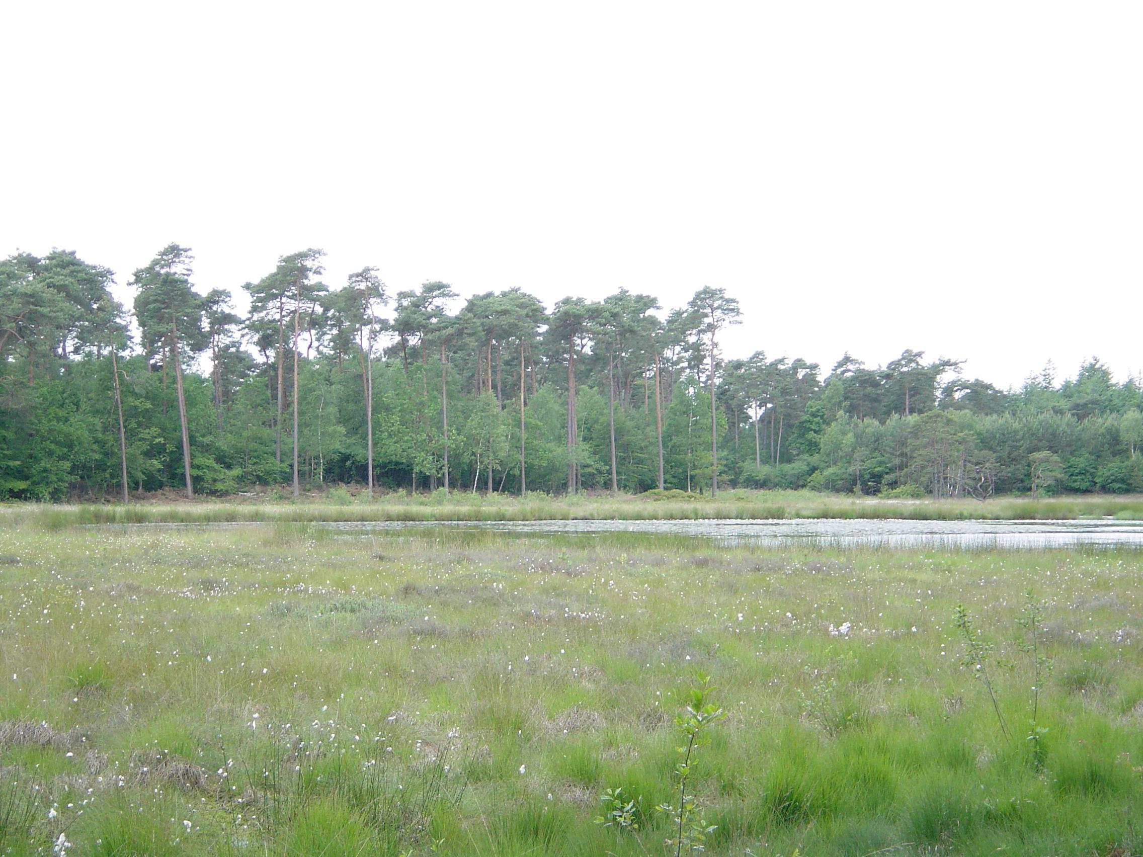 Woods around Ommen (Holland) - June 2005