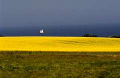 Horizon 4 (Maharepa) Tags: leica travel blue field yellow photography design photo foto fotografie top20landscape bornholm photodesign maharepa fotodesign
