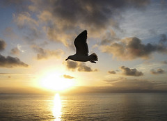 Bird in Flight (Tonym1) Tags: bird ocean nature clouds sky
