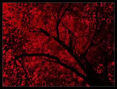 Paint in red - by Iguana Jo