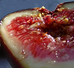 Juicy (lynne bernay-roman) Tags: fruit succulent juicy fig sensual delicious