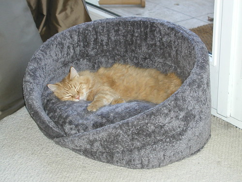 Sweet Kitty in new bed 001