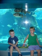 SeaLifeNov04 (2) (WanderNeal) Tags: hawaii daniel acquarium ethan