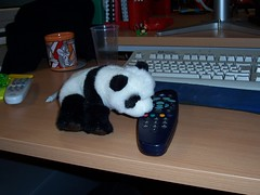 Lil' BBCi Panda Pushes That Red Button