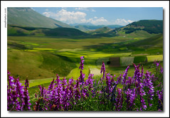 landscape as background (anbri22) Tags: anbri flowers sibillini fiori landscape mountains montagne paesaggio pace ilovenature