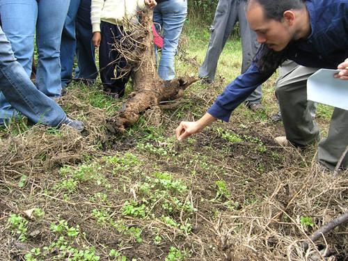 curso_permacultura semillero