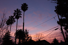 Silicon Valley sunset (Josh Thompson) Tags: trees sunset freeassociation d50 wires suburbs mountainview 1855mmf3556g nikoncapture