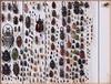 Coleoptera mixed (nmbeinvertebrata) Tags: nmbe0220 coleoptera scarabaeidae buprestidae cerambycidae lucanidae