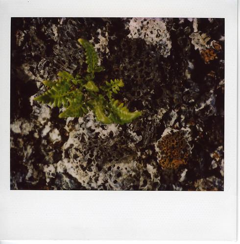 07jan14m (vnp kilauea caldera floor).jpg