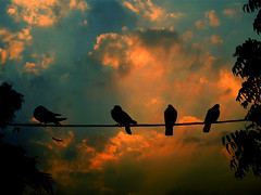 glowing darkness (!!sahrizvi!!) Tags: pakistan sunset sky sun nature beautiful birds silhouette clouds dark wire lowlight bravo darkness outdoor dusk pigeons silhouettes dramatic backlit karachi ruleofthirds rizvi sahrizvi sarizvi abigfave artlibre