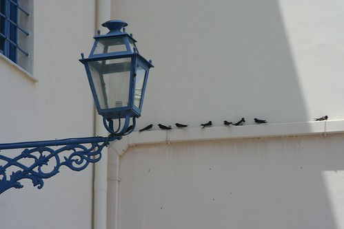 Swallows in Greece