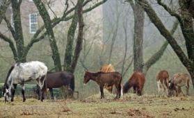 Kinship Circle - 2007-02-08 - 01 - Neglected Horses