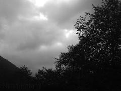 Dark Jungel - Wild Sky
