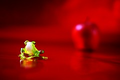 Eve (* Garron Nicholls *) Tags: eve red stilllife apple glass 50mm eva frog evi ewa f17 garron interestingness52 i500