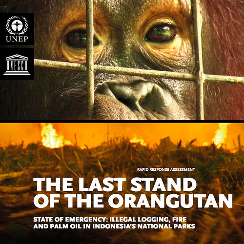 "UNEP Report ""The Last Stand of the Orangutan"""