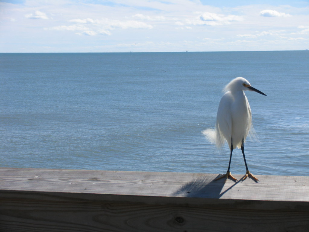 Bird on Cocoa Beach Pier