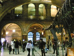 Natural History Museum Foyer