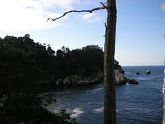 Seascape 3: Point Lobos State Reserve