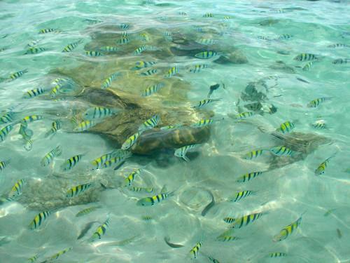 サムイ島 今日のお天気‐熱帯魚